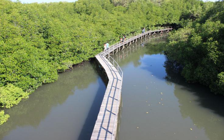 Kementerian Pariwisata Hutan Mangrove Bali Menikmati Sisi Lain Wisata Pulau
