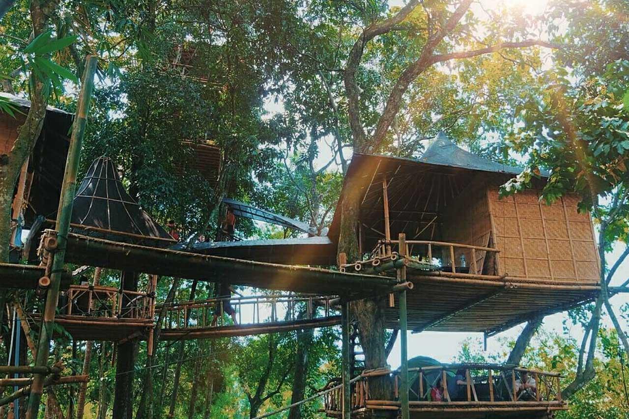 Limakaki Menyatu Alam Rumah Pohon Temega Bali Wisata Hutan Mangrove