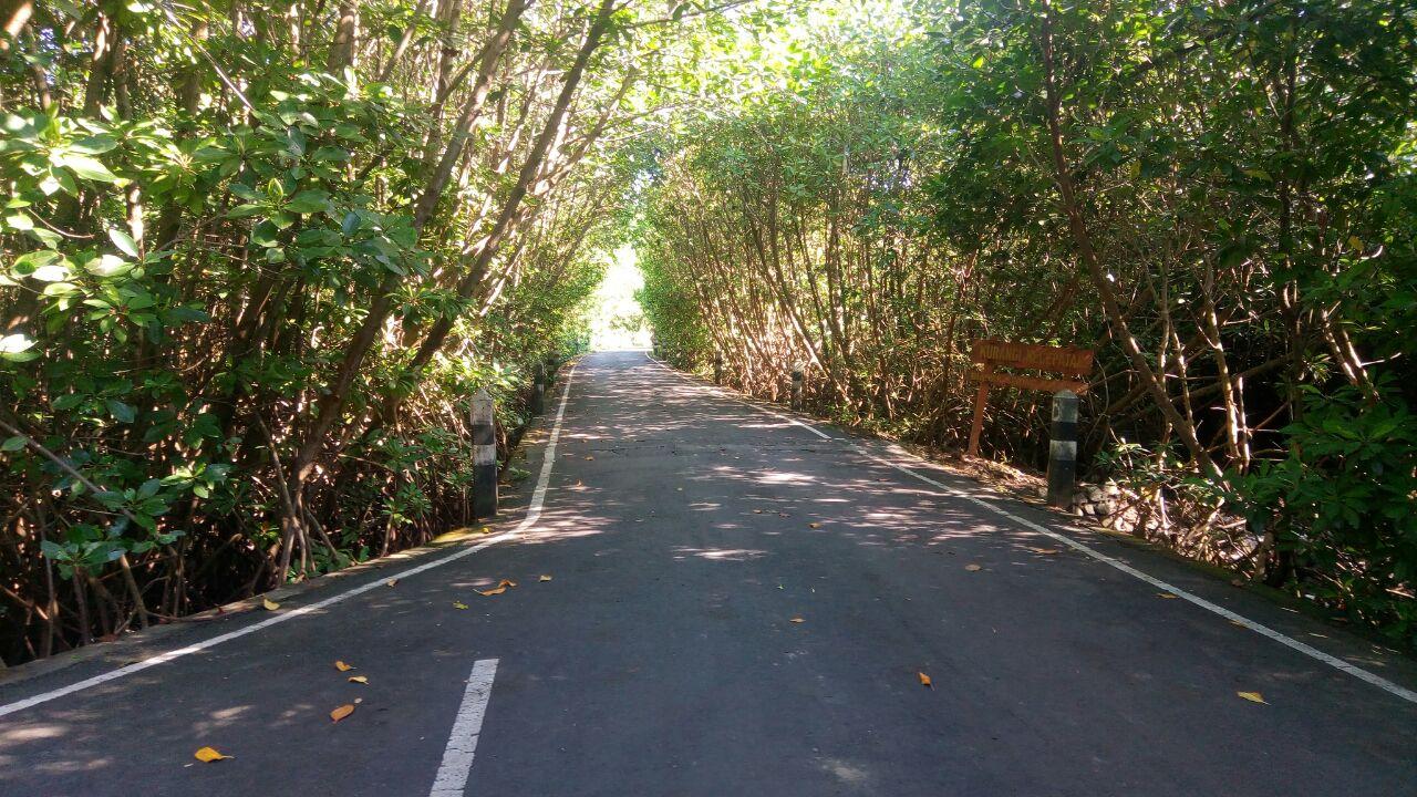 Mangrove Bali Hijau Kesejukan Wisata Hutan Bakau Tengah Galeria Sebagai