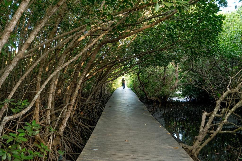 Mangrove Boardwalk Denpasar Wisata Alam Pemandangan 1 1024x683 Menakjubkan Hutan