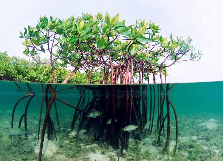 Mangrove Buonoin Bali Hutan Kita Jumpai Jalan Pass Ngurah Rai