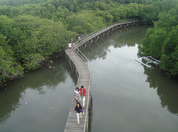 Mangrove Tahura Ngurah Rai Bali Nasibmu Mongabay Id Wisata Hutan