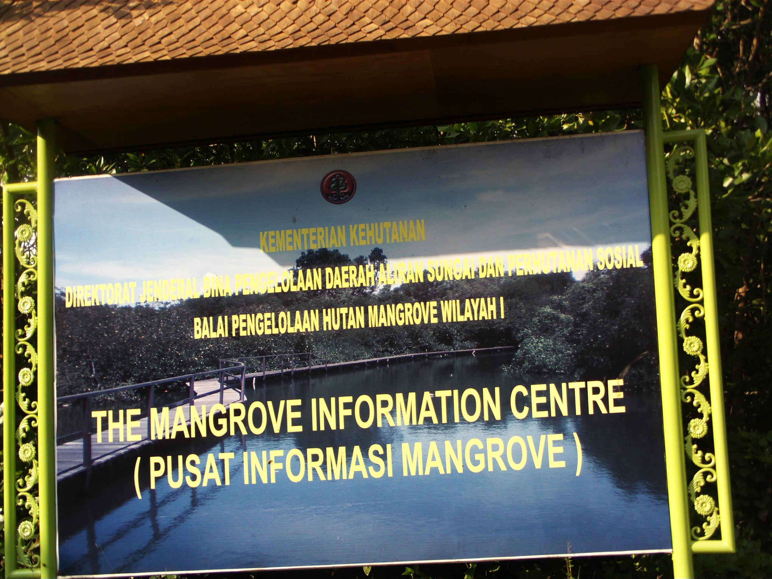 Mangrove Wisata Edukasi Tunsa Mungkin Benar Kata Gandhi Menemukan Tempat