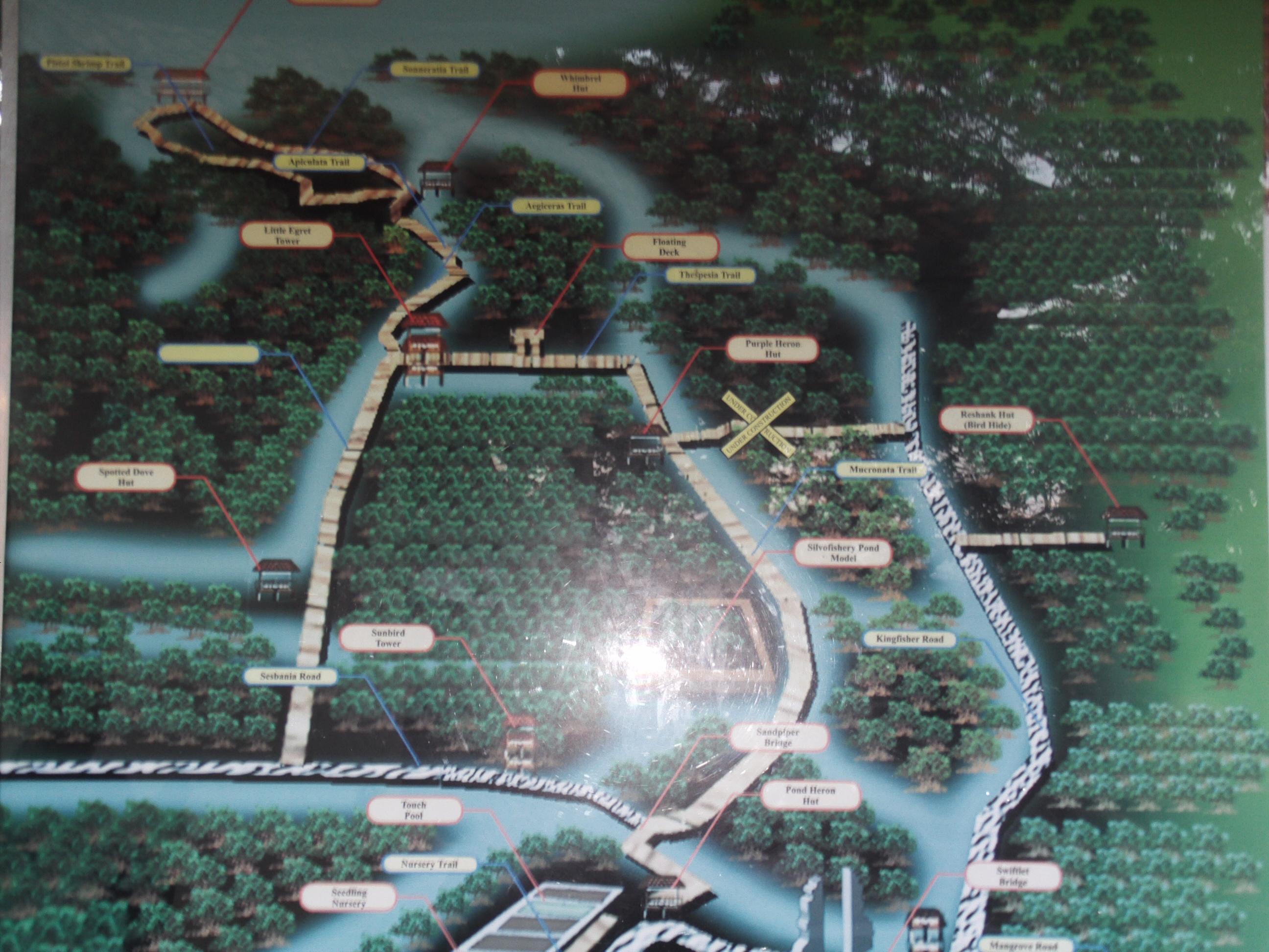 Mangrove Wisata Edukasi Tunsa Peta Rute Jalan Hutang Lumayan Panjang