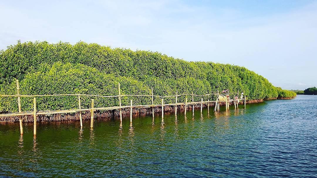 Mantan Artis Hollywood Dukung Pelestarian Mangrove Bali Foto Ilustrasi Hutan