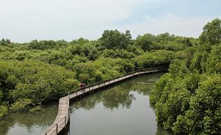 Menikmati Keindahan Hutan Mangrove Bali Diwira Tour Travel Objek Wisata