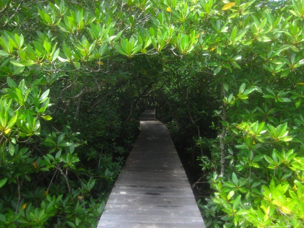 Menjelajahi Hutan Mangrove Bali Wisata Bakau Kota Denpasar
