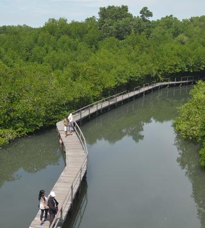 Nikmati Sensasi Wisata Alam Hutan Mangrove Bali Merahputih Sendiri Bukan