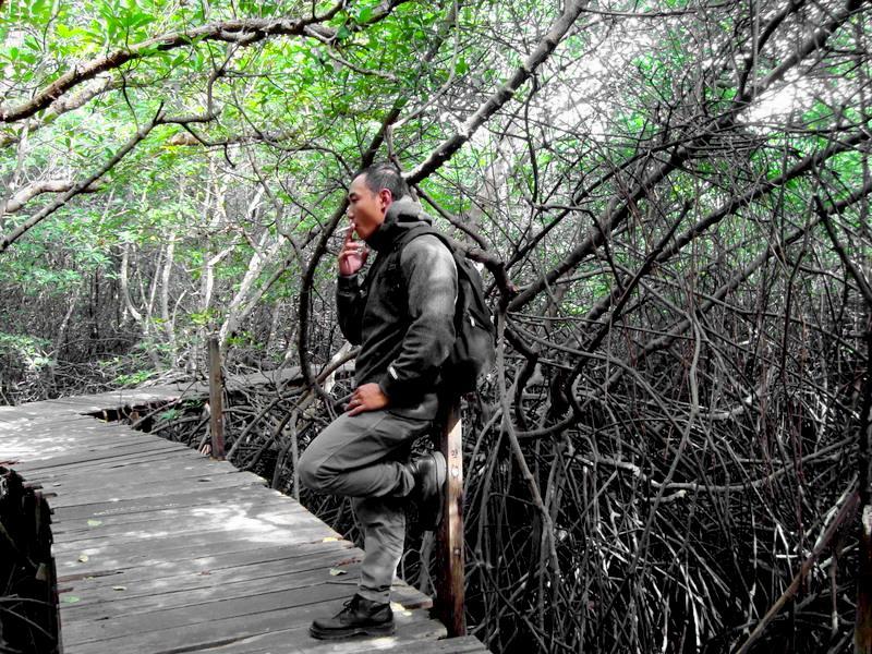 Objek Wisata Bali Hutan Mangrove Sinilah Letak Tersebut Bakau Sebenarnya