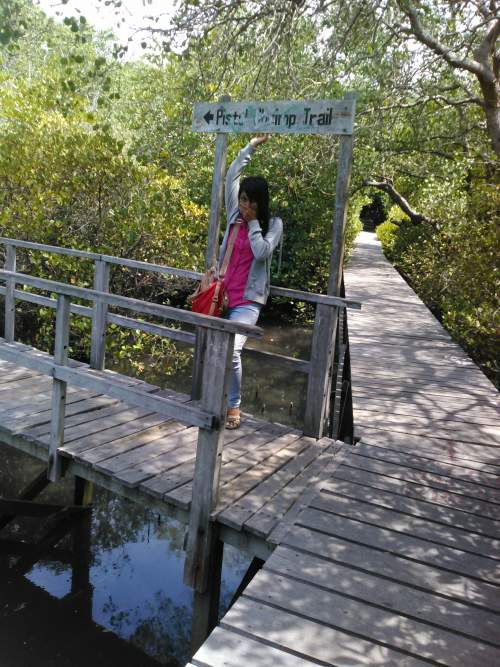 Objek Wisata Hutan Mangrove Kota Denpasar Bali Mentari Holiday Bakau