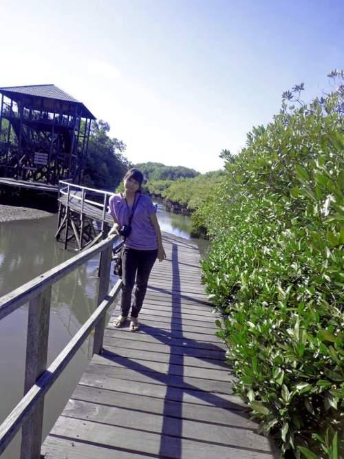 Objek Wisata Hutan Mangrove Kota Denpasar Bali Mentari Holiday Pemandangan