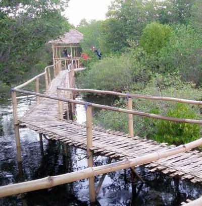 Objek Wisata Hutan Mangrove Pejarakan Gerokgak Buleleng Bali Bakau Kota