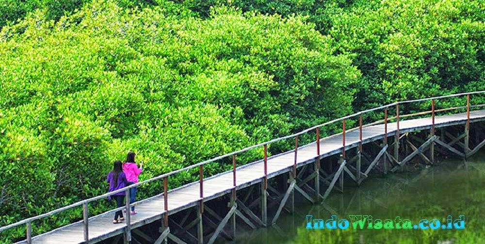 Obyek Wisata Hutan Mangrove Bali Beautifulsky Bakau Kota Denpasar