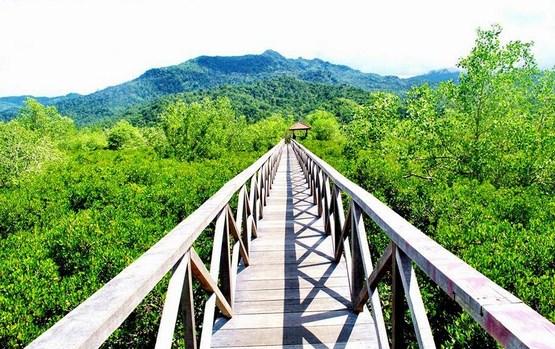 Pesona Keindahan Wisata Hutan Mangrove Pancer Cengkrong Trenggalek Sarankan Mencari