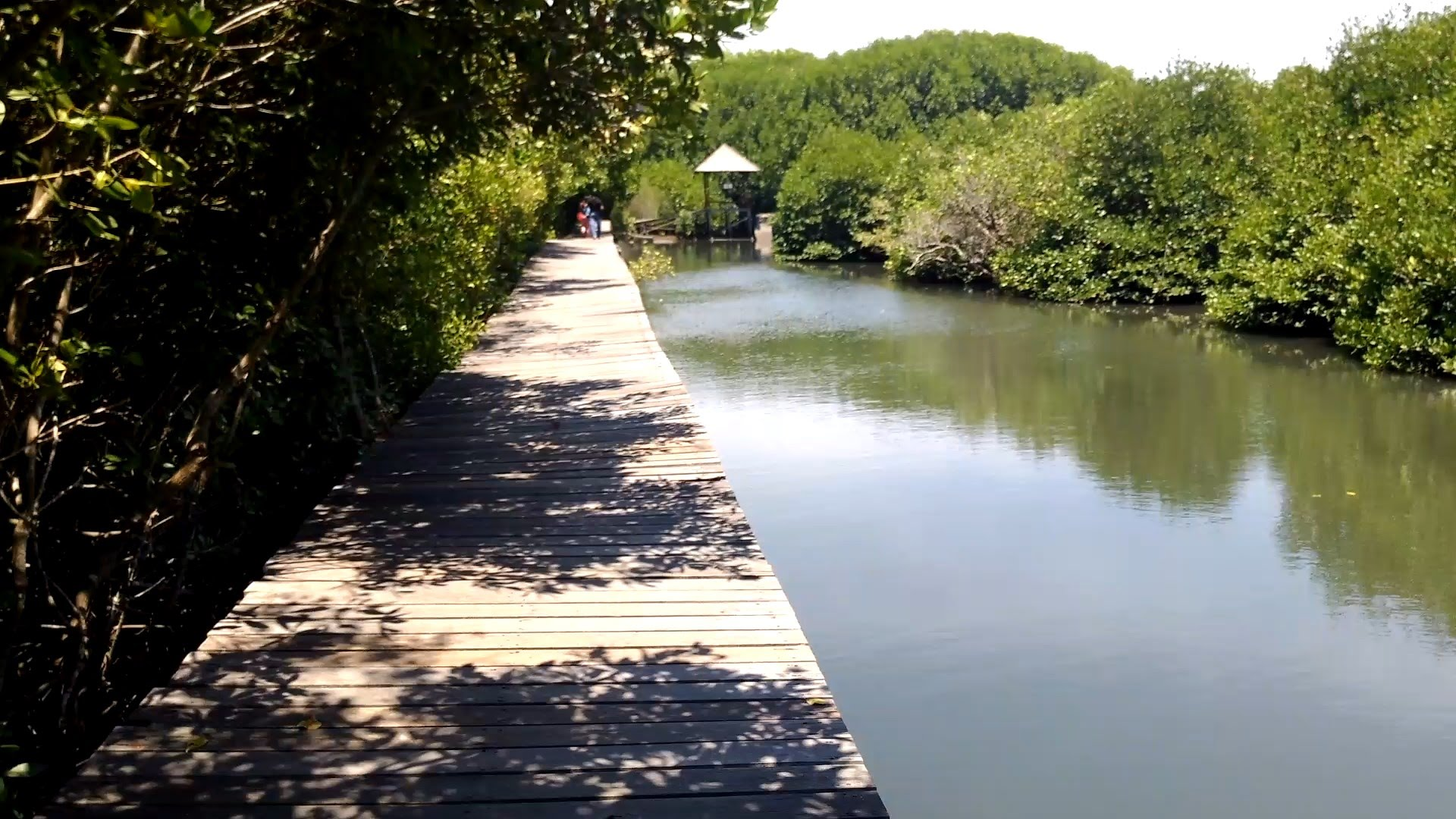 Review Travel Guide Hutan Mangrove Bali Indonesia Forest Tour Youtube