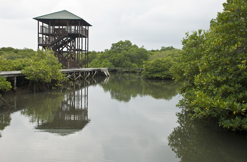Tarian Jemariku Jangan Korbankan Hutan Mangrove Alasan Apapun Wisata Bali