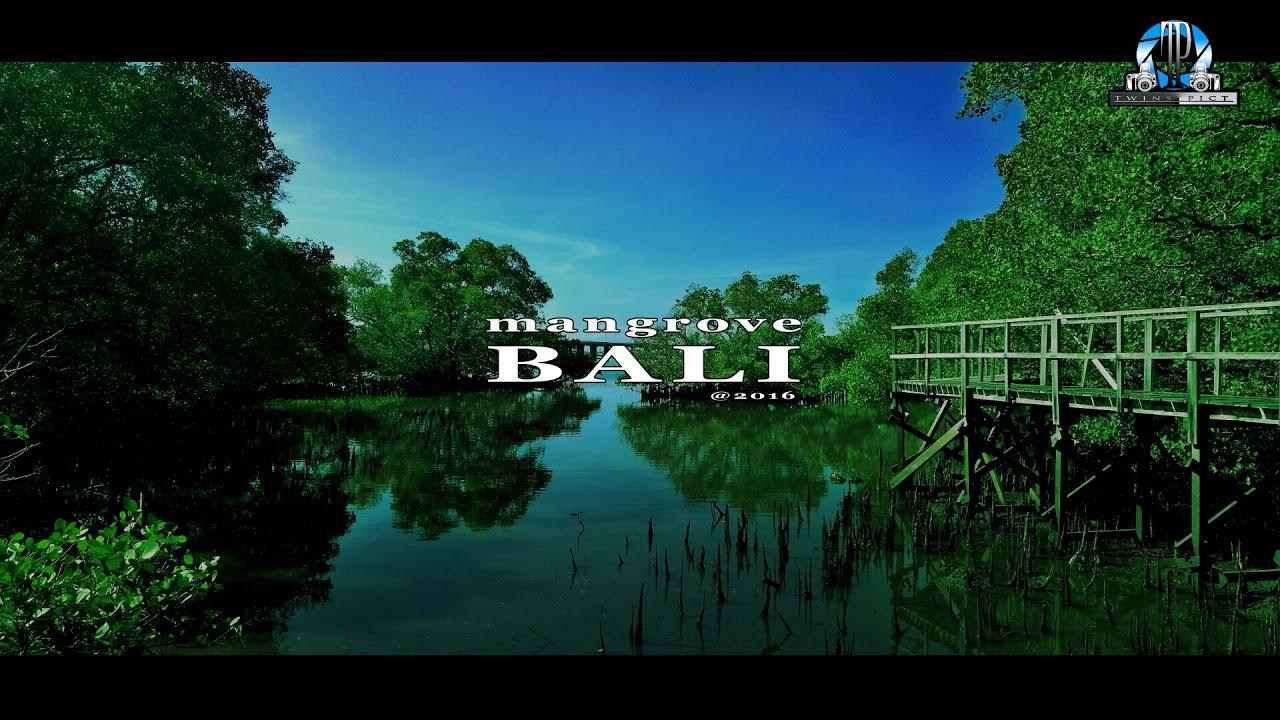 Tempat Wisata Bali Hutan Mangrove Denpasar Twins Picture Bakau Kota