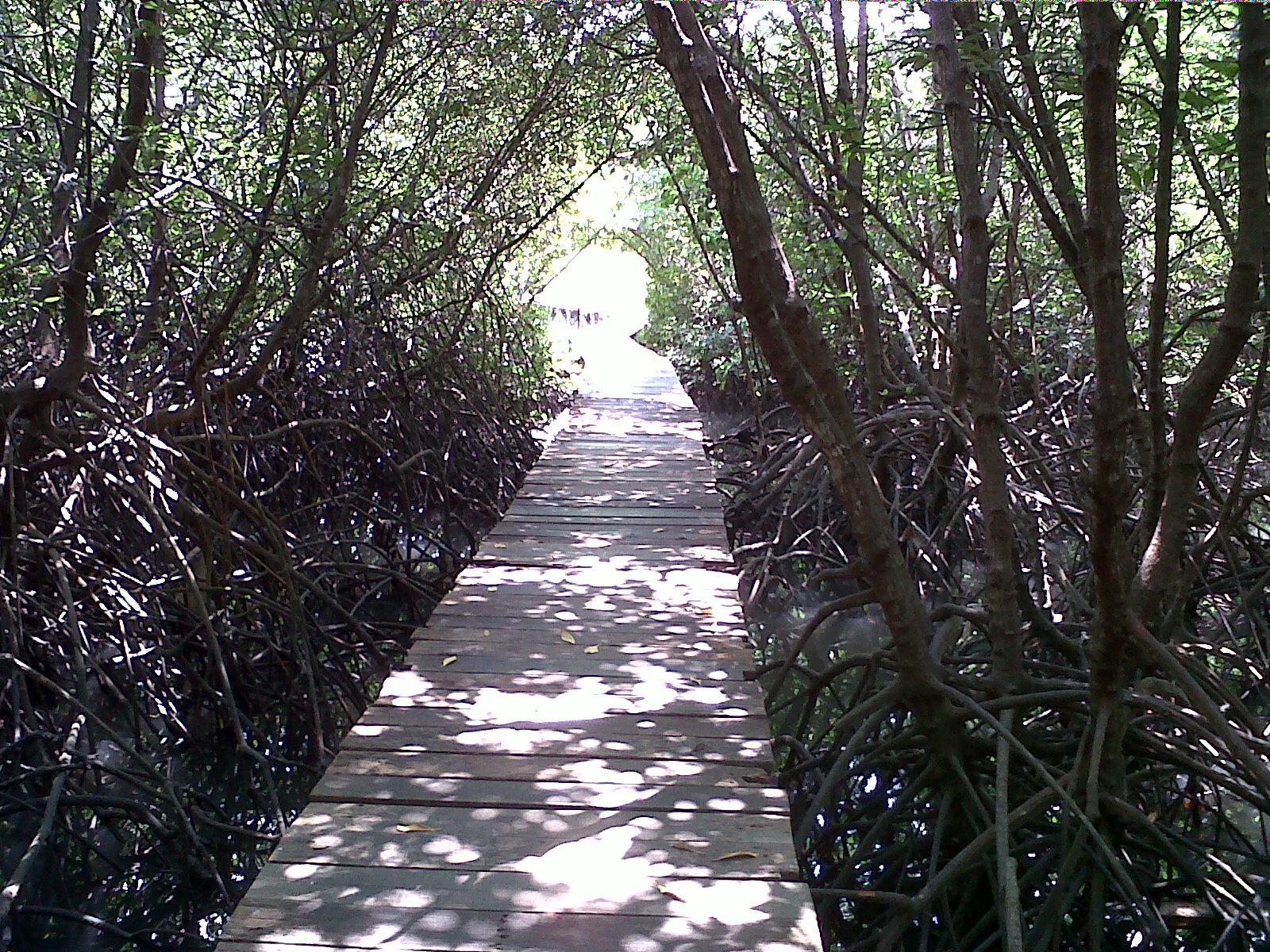 Tempat Wisata Hutan Mangrove Bali Pemandangan Bakau Kota Denpasar