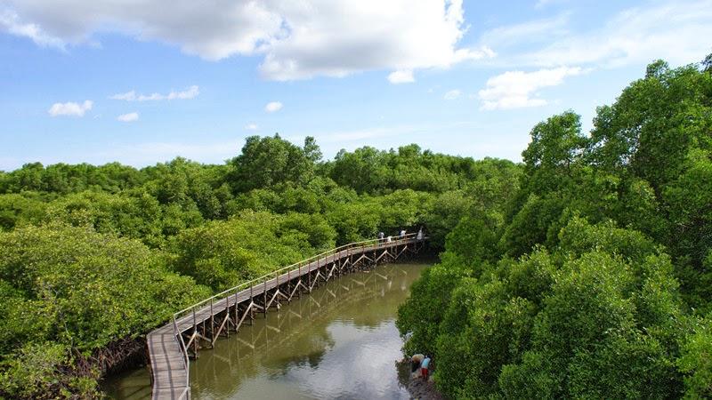 Tempat Wisata Mangrove Denpasar Bali Vebma Hutan Bakau Kota