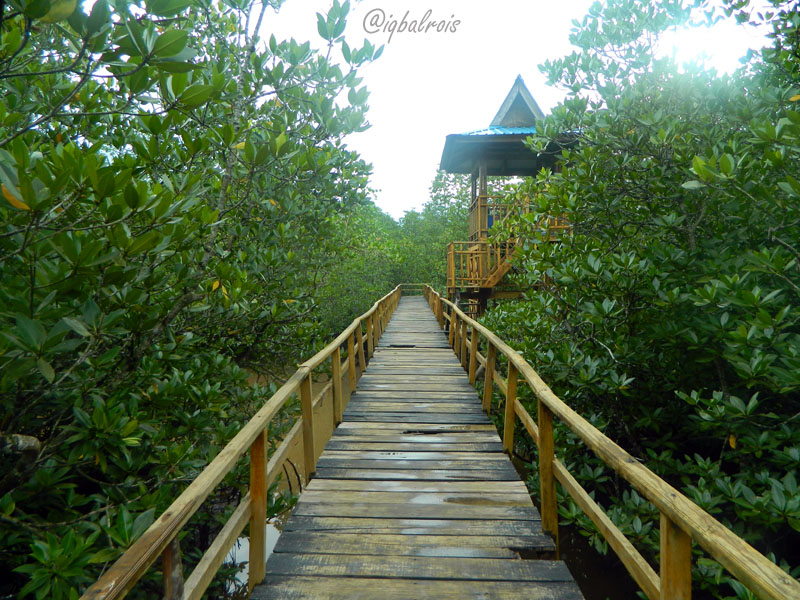 Travel Mangrove Bali Hutan Bakau Biasa Disebut Bisa Menjadi Salah