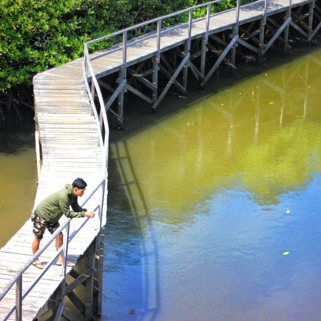 Wisata Alam Hutan Mangrove Taman Raya Ngurah Rai Bali 1