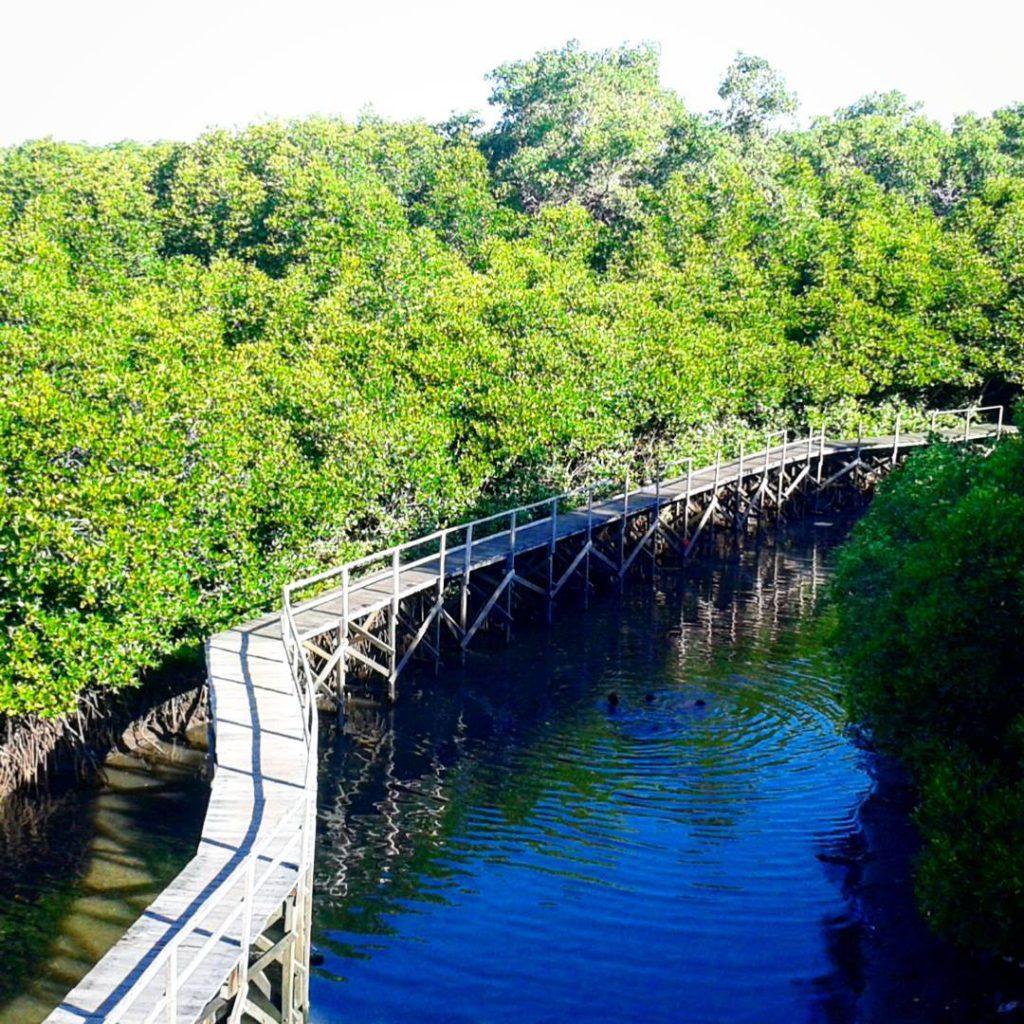 Wisata Alam Hutan Mangrove Taman Raya Ngurah Rai Bali 3