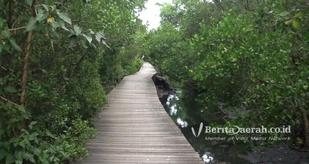 Wisata Alam Hutan Mengrove Kuta Bali Berita Daerah Mangrove Bakau