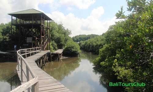 Wisata Hutan Bakau Mangrove Bali Kota Denpasar