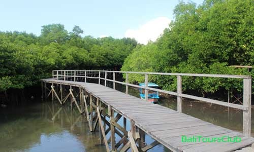 Wisata Hutan Bakau Mangrove Bali Pemandangan Kota Denpasar