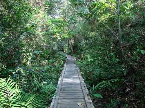 30 Tempat Wisata Populer Jambi Vebma Hutan Kota Mayang Mangurai
