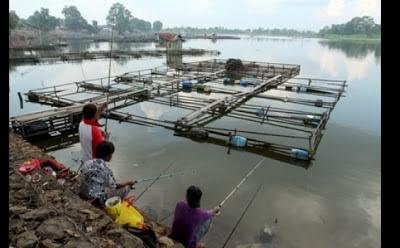 Jambi Family Timoho Danau Sipin Tempat Cocok Mengail Ikan Air