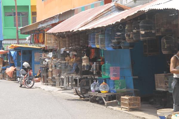 Pasar Unik Dinas Kota Jambi Melirik Unggas Burung Dipasar Keramik