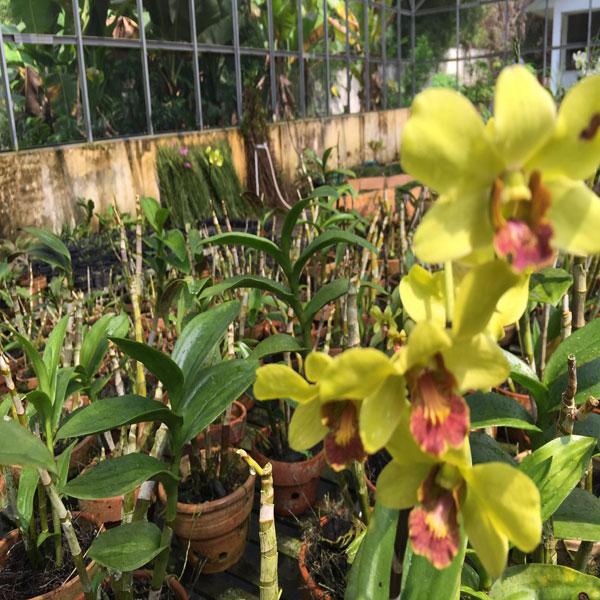 10 Tempat Wisata Jambi Taman Anggrek Sri Soedewi Kota