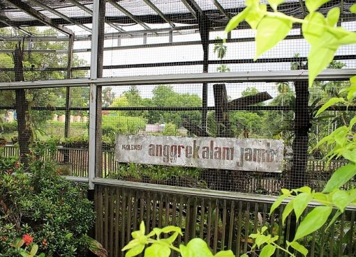 Alunan Gemuruh Telun Berasap Menenangkan Perbincangan Perempuan Mengunjungi Taman Anggrek