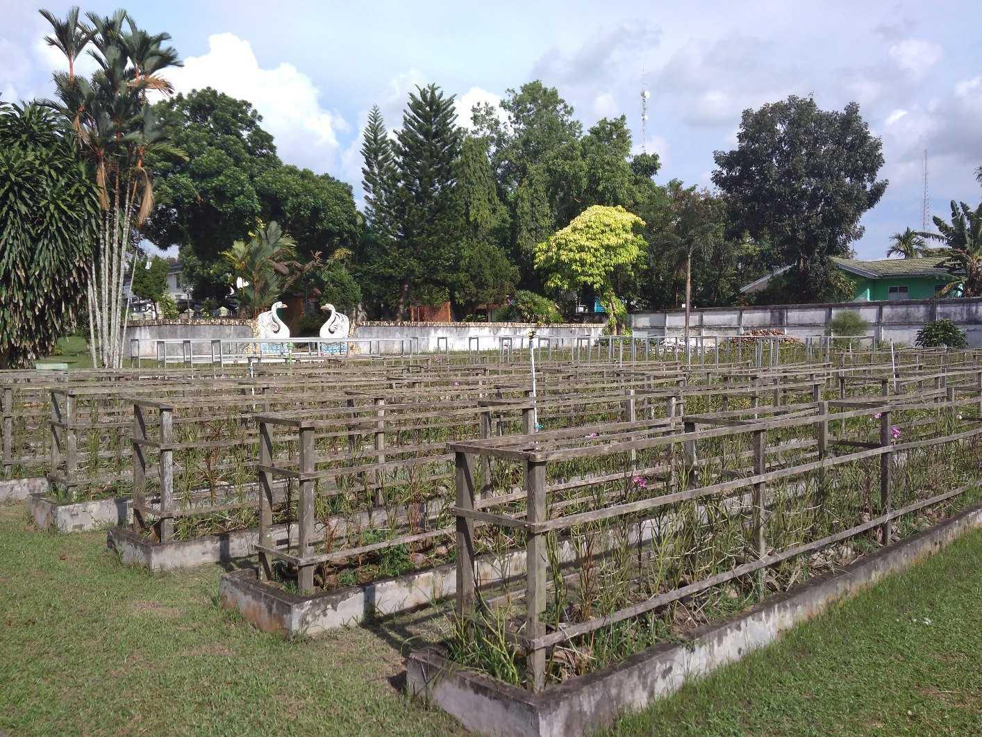 Belajar Berwisata Taman Anggrek Sri Soedewi Jambi Oleh Dendy Seftiawan
