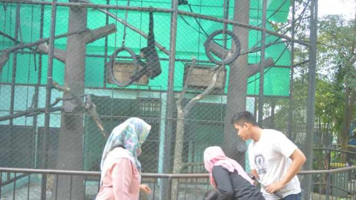 Galeri Foto Lho Tempat Cocok Bermain Anak Kota Jambi Taman