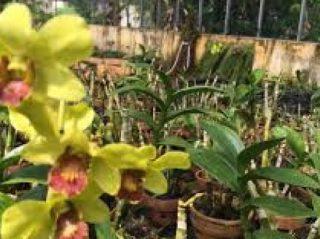 Libura Akhir Pekan Taman Anggrek Sri Soedewi Wisata Tanahair Kota