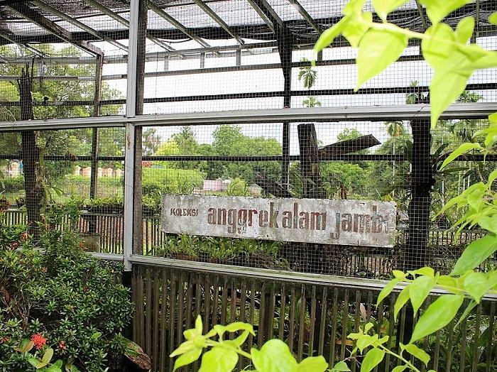 Mengunjungi Taman Anggrek Sri Soedewi Perbincangan Perempuan Jambi Kota