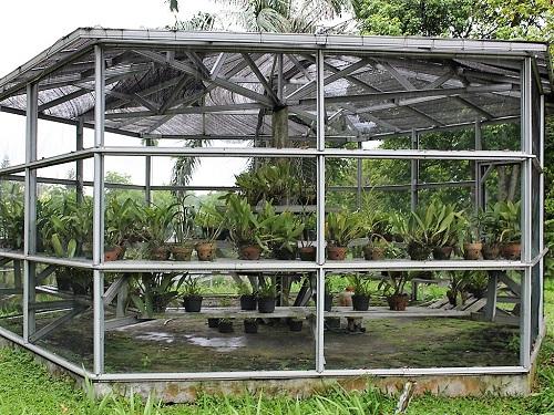 Mengunjungi Taman Anggrek Sri Soedewi Perbincangan Perempuan Penangkaran Koleksi Langka