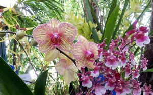 Monas Jambi Bentuknya Beepdo Taman Anggrek Sri Soedewi Minnpost Kota