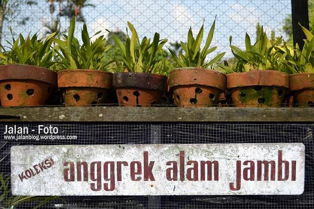 Pesona Kota Jambi Part 2 Jalanblog Taman Agggrek Sri Soedewi