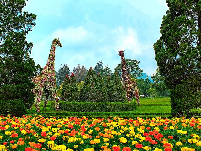 Photo Taman Anggrek Sri Soedewi Beautiful Indonesia Umm Bunga Nusantara