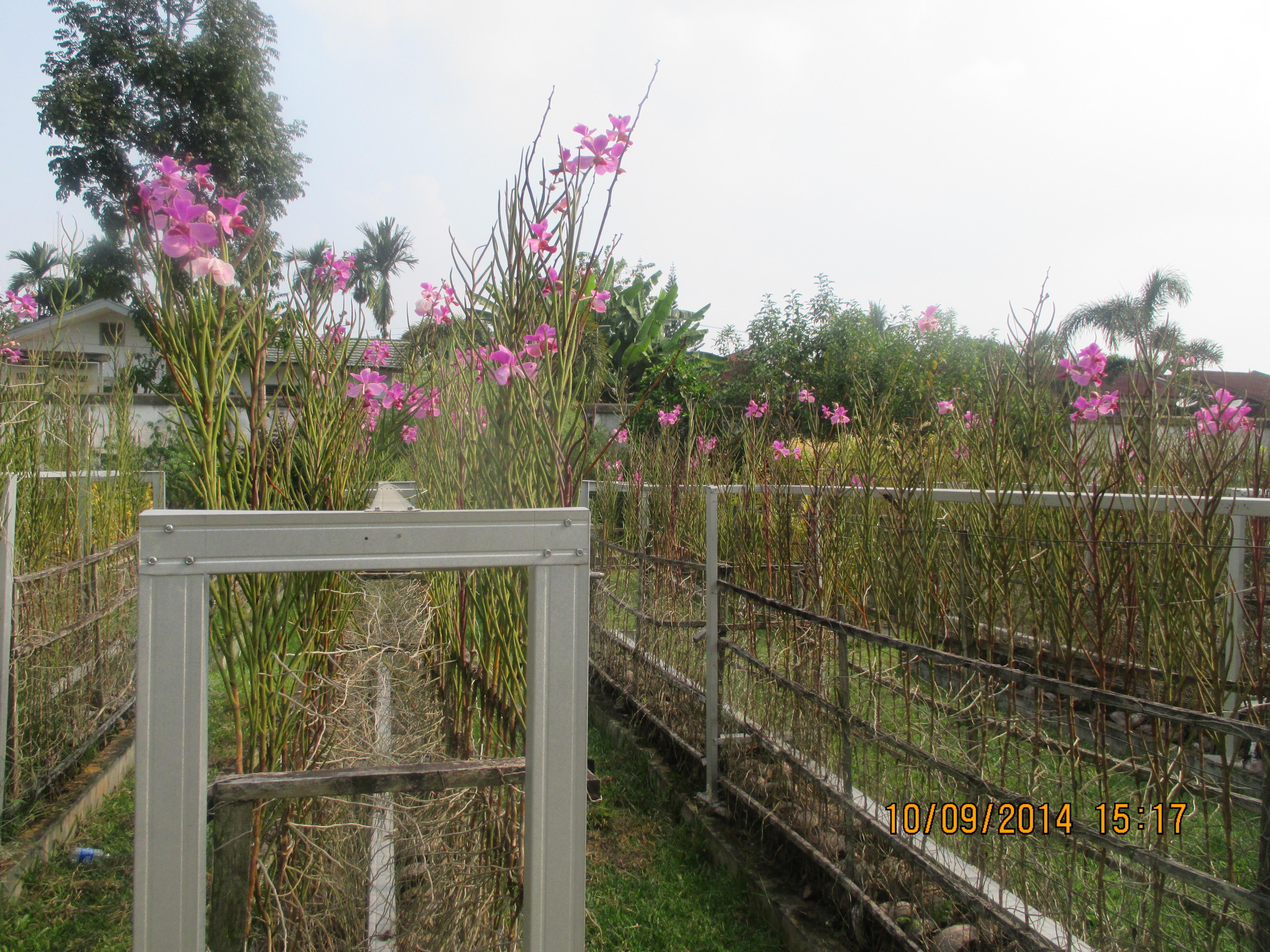 Taman Anggrek Prof Dr Sri Soedewi Sh Jambi Yanmata Img