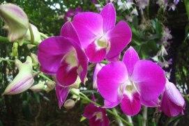 Taman Anggrek Sri Soedewi Jambi Liburwisata Kota