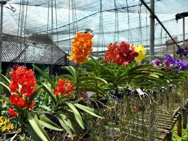 Taman Anggrek Sri Soedewi Jambi Wonderful Indonesia Kota