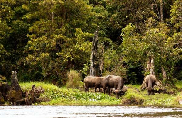 Tempat Wisata Terbaik Provinsi Jambi Ideloka Taman Nasional Kerinci Anggrek