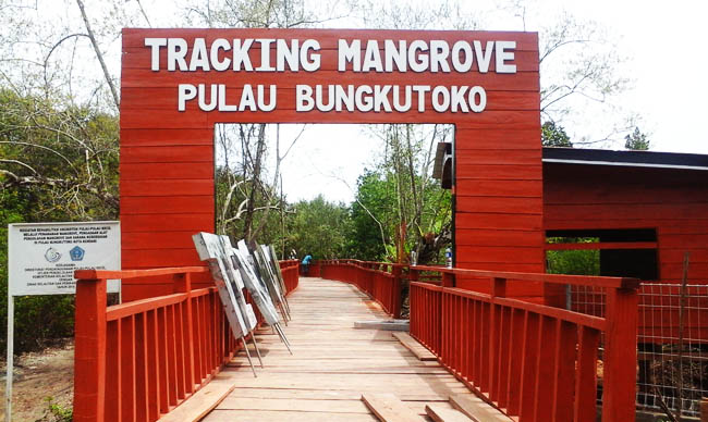 Lasunapa Nih Objek Wisata Andalan Sulawesi Tenggara Tracking Mangrove Pulau
