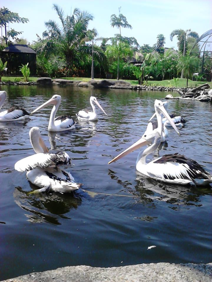 Gowa Discovery Park Perpaduan Wahana Petualangan Rekreasi Dihibur Alunan Musik