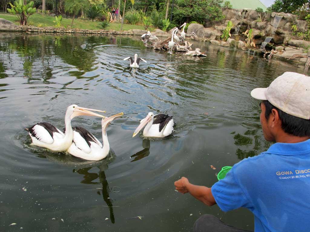 Keriangan Taman Burung Somba Opu Beranda Irma Puan Mawar Petugas