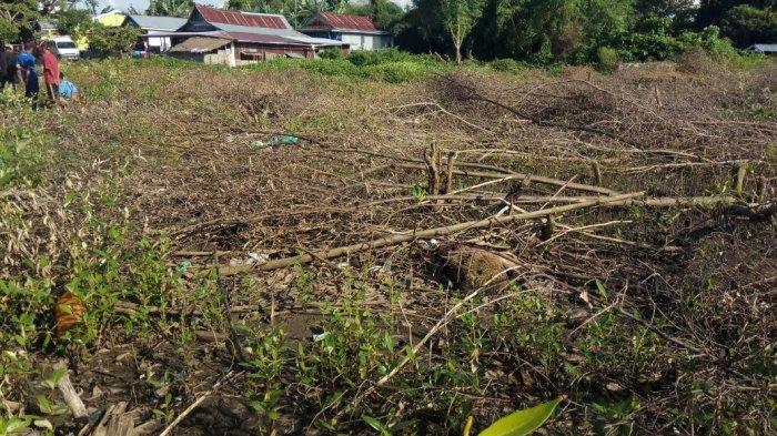 Hutan Mangrove Pantai Kuri Maros Beralihfungsi Reaksi Walhi Sulsel Caddi